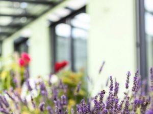 immocontec-Referenz: Verschwommene Aufnahme von Blumen vor einem Zweifamilienhauses mit Doppelgarage in Poppenricht